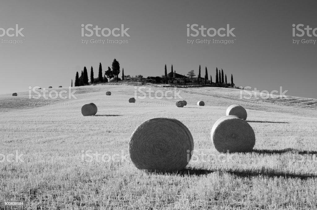 Round hay bales,  Tuscany, Italy. B&W stock photo