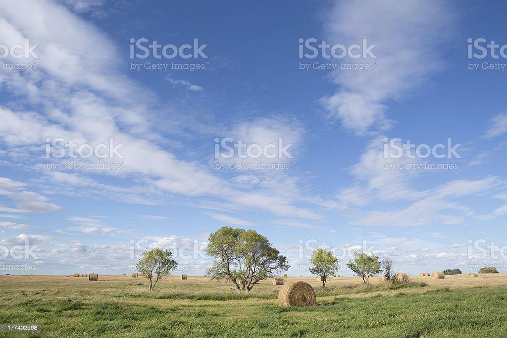 round haybales on a prairie field stock photo