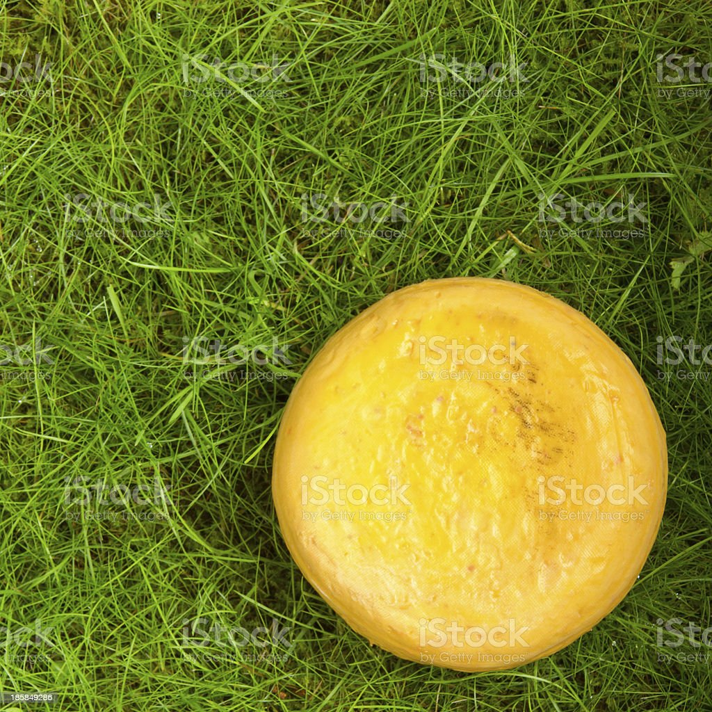 Round onion cheese isolated in the green grass royalty-free stock photo