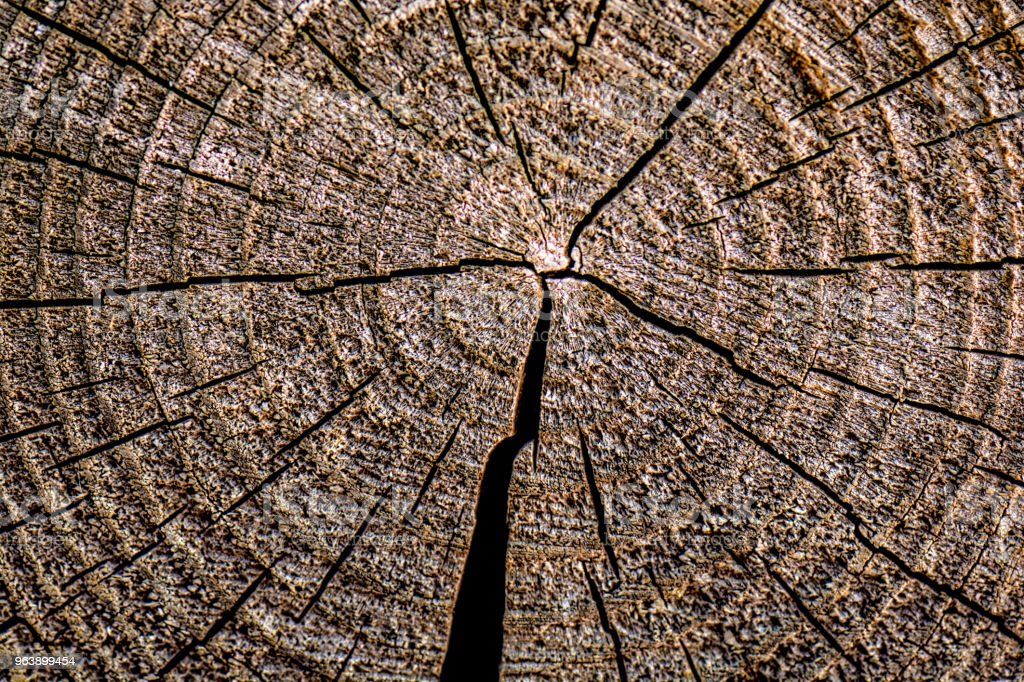 Round piece of wooden stump cut with aged tree rings. Old wood texture with cracks and bark - Royalty-free Brown Stock Photo