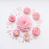 Round pink pale flowers composition with petals on white desktop background, flat lay, top view.