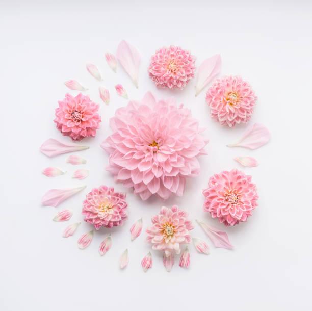 ronda composición de flores de color rosa pálido con pétalos sobre fondo escritorio blanco, plana visión laica y superior. - diseños de bodas fotografías e imágenes de stock