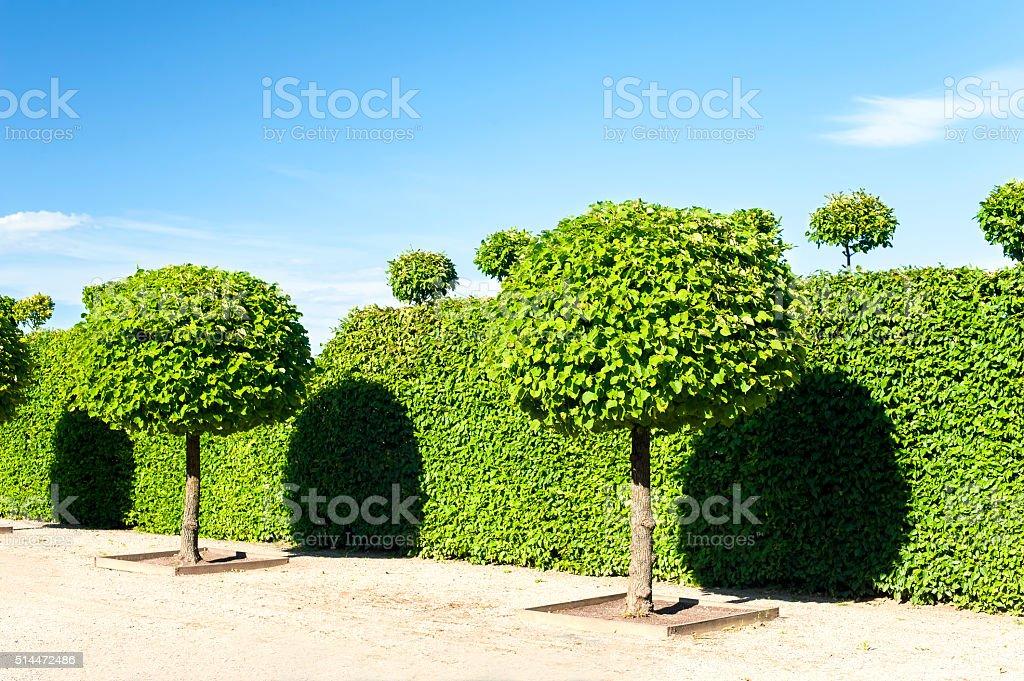 Ronde art topiaire vert arbres de Rundale jardin d'ornement. - Photo