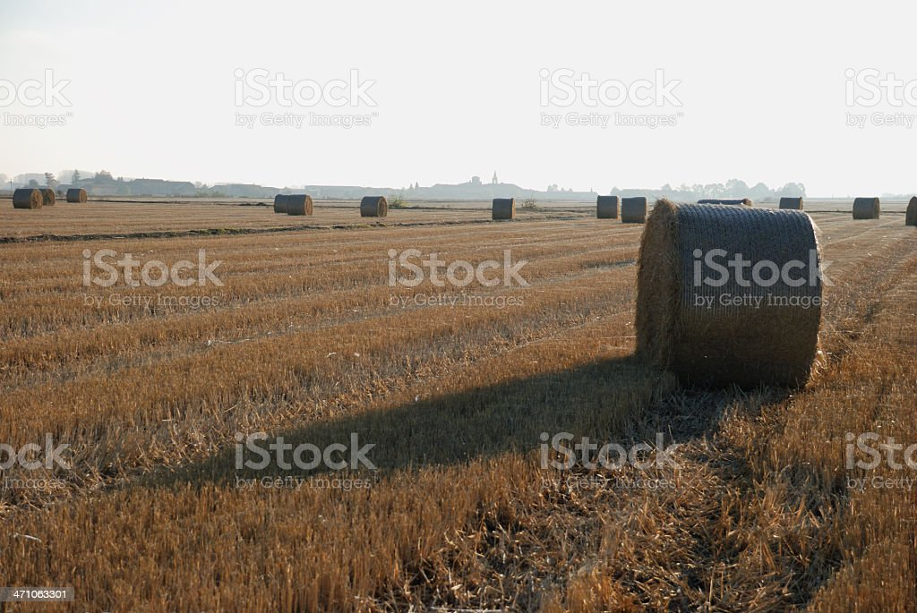 Round straw bale, Briona (Novara) Italy royalty-free stock photo