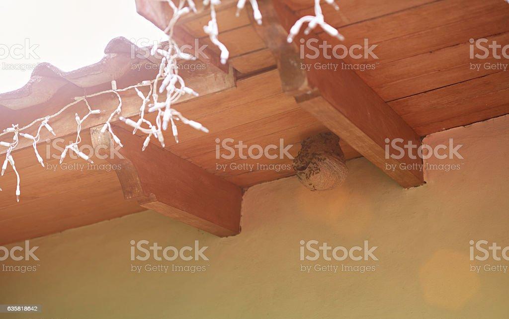 Round wasp nest on roof stock photo