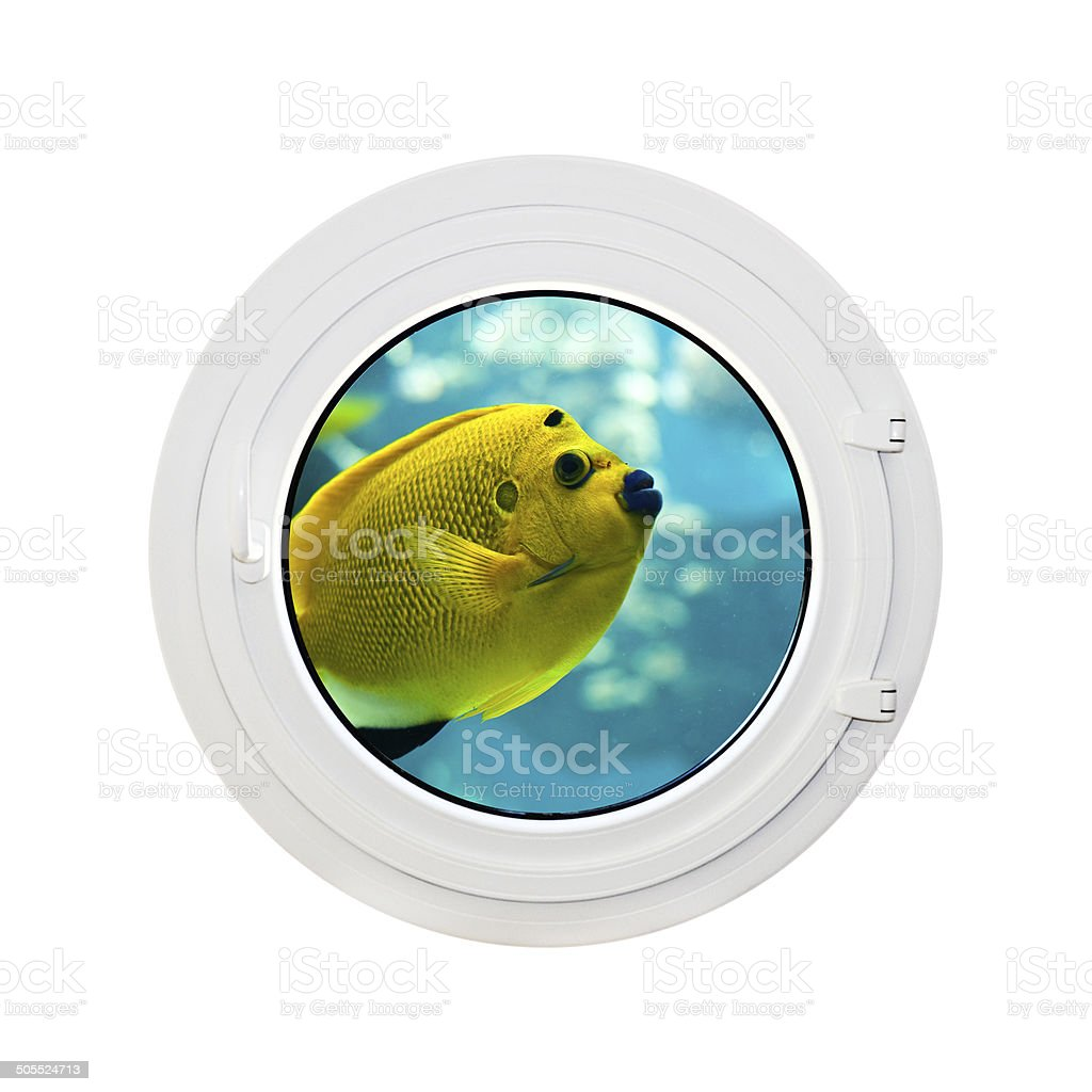 Round window, view on a tropical fish stock photo