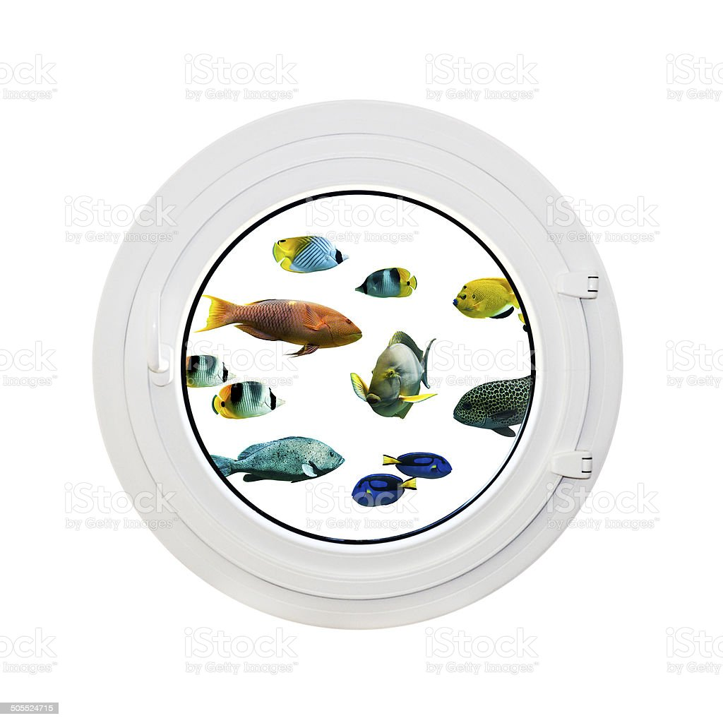 Round window, view on tropical fishes, isolated on white background stock photo