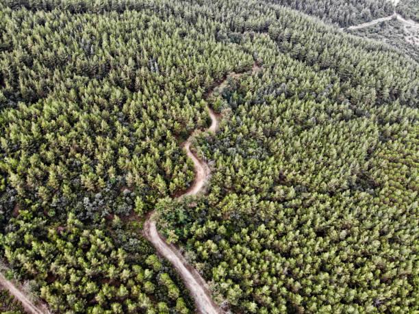 Roundabout ormanı stok fotoğrafı