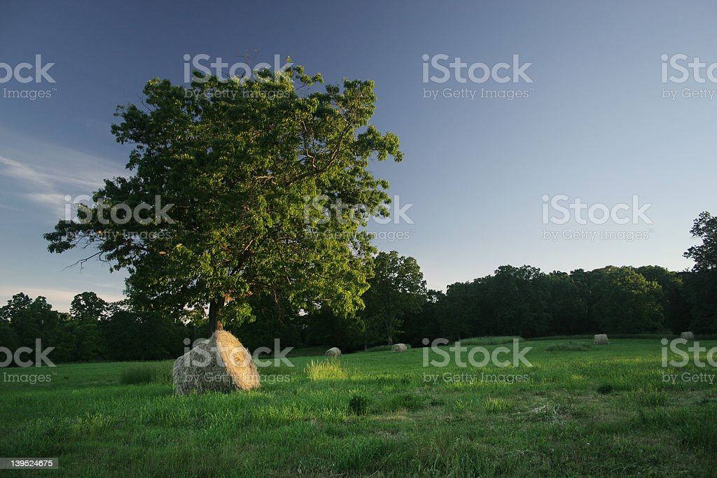 Roundbale of hay in a field stock photo