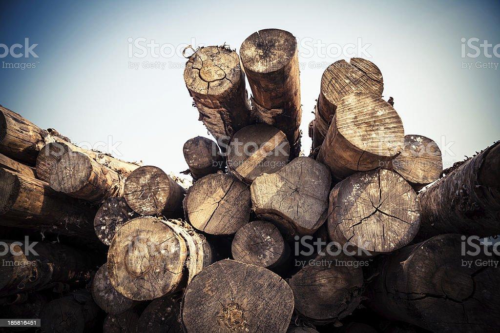 Roundwood heap stock photo