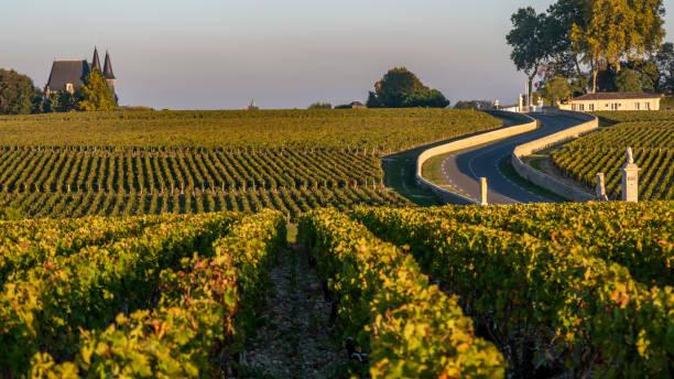 route des châteaux, weinberg im medoc, amous weingut bordeauxwein, frankreich - bordeaux wein stock-fotos und bilder
