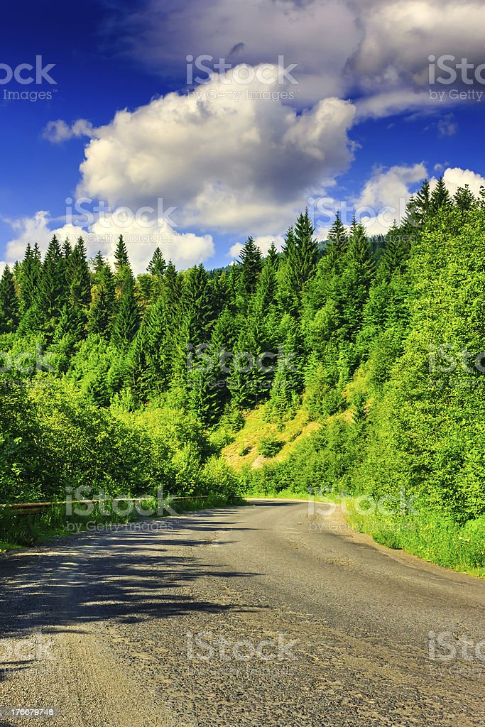 route through the mountains to pine forest royalty-free stock photo