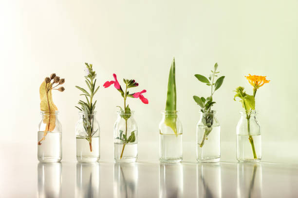 Row jars with liquid and plants inside natural medicine concept stock photo