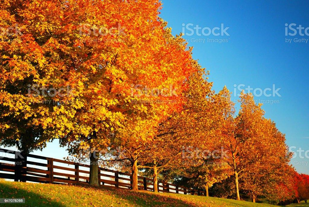 A row of autumn trees stock photo