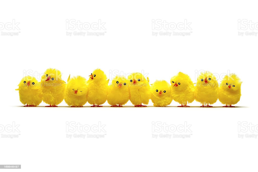 Row of Baby Chicken - Chick Humor Fun Easter stock photo