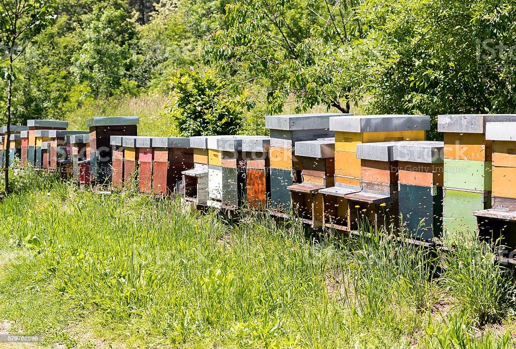 Row of Bee hives. stock photo
