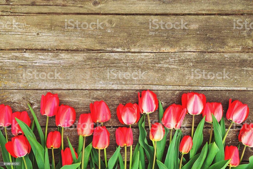 a76f8be06ac7 Fila de flores de brillante tulipán rojo rico en el tallo. Fondo de madera  con