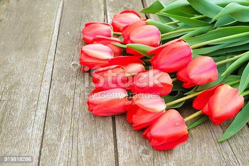 7a2793868955 fotos de Fila de flores de brillante tulipán rojo rico en el tallo. Fondo de
