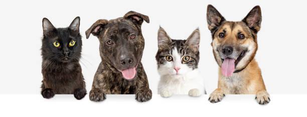 Row of cats and dogs hanging over white web banner picture id1127456722?b=1&k=6&m=1127456722&s=612x612&w=0&h=r5hukcrxufbvrznmoqeggysmtxjgkfn7jthcdalzffc=