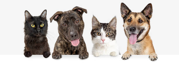 Row of Cats and Dogs Hanging Over White Web Banner stock photo
