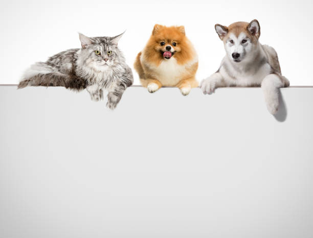 Row of cats and dogs hanging their paws over a white banner picture id1048876318?b=1&k=6&m=1048876318&s=612x612&w=0&h=18rcatlg7gcyzqugaueqyxohq rr  f0zhghw0ajyym=