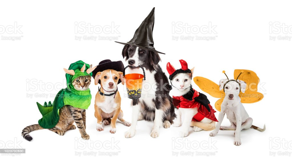 Row of Cats and Dogs in Halloween Costumes royalty-free stock photo