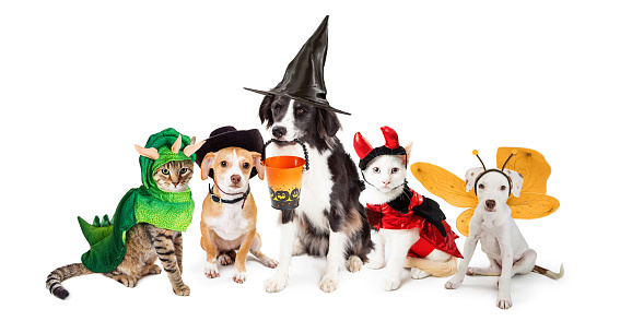 Row of dogs and cats dressed in Halloween costumes together on white background