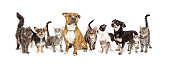 Row of different size and breeds of cats and dogs together, isolated on a white social media or web banner