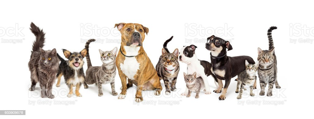 Row of Cats and Dogs Together on White stock photo