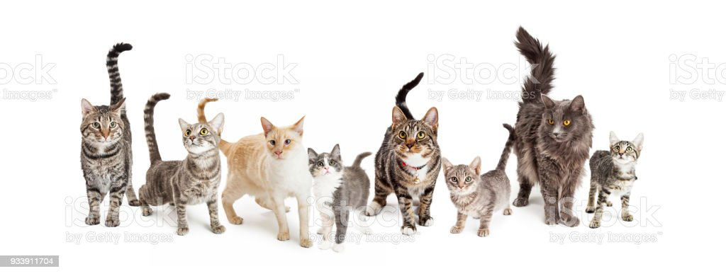 Row Of Cats And Kittens Horizontal Web Banner Stock Photo - Download Image  Now - iStock