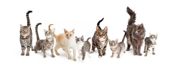 Row of cats and kittens horizontal web banner picture id933911704?b=1&k=6&m=933911704&s=612x612&w=0&h=nsvugmxhhlfe3iie3ff0k pcq40lf3d59sa5dvckut8=