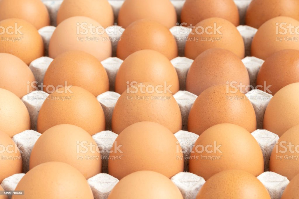 row of chicken eggs in paper tray royalty-free stock photo