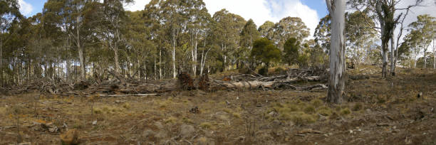 row of chopped down, cleared and bulldozed tree's on a rural property, New  South Wales, Australia stock photo