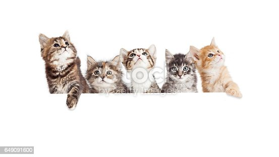 istock Row of Cute Kittens Hanging Over White Banner 649091600