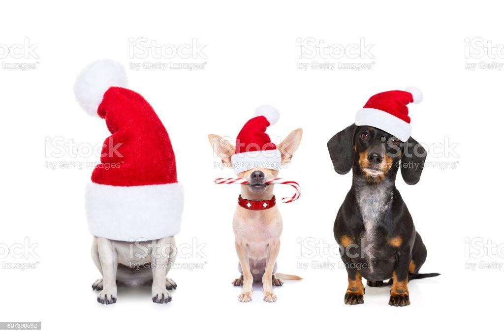 Reihe von Hunden auf Weihnachtsferien – Foto