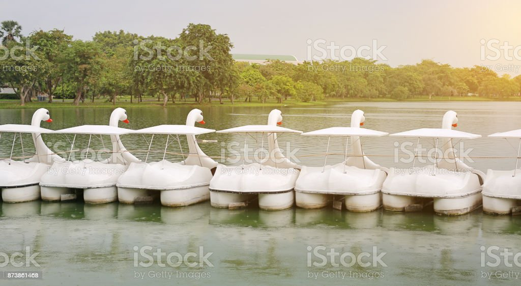 Row of Duck water bicycle floating on the lake in public park. stock photo
