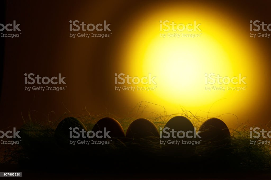 Row of five colorful pastel monophonic traditional painted Easter eggs in green grass on dark yellow background with black shadows, silhouette, light. Copy space for advertisement. With place for text stock photo