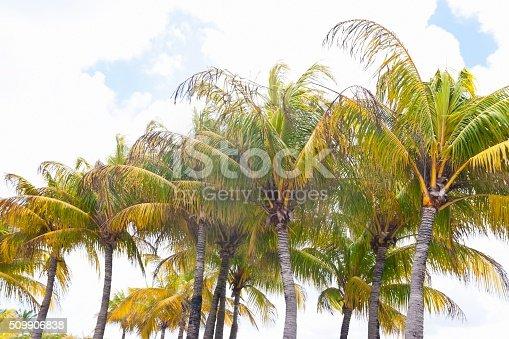 Row of Florida palm trees against blue cloudy sky
