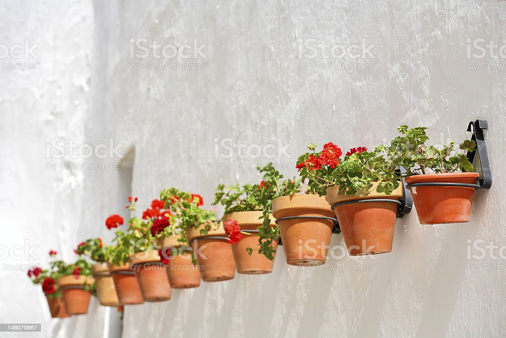 Row of flowerpots royalty-free stock photo
