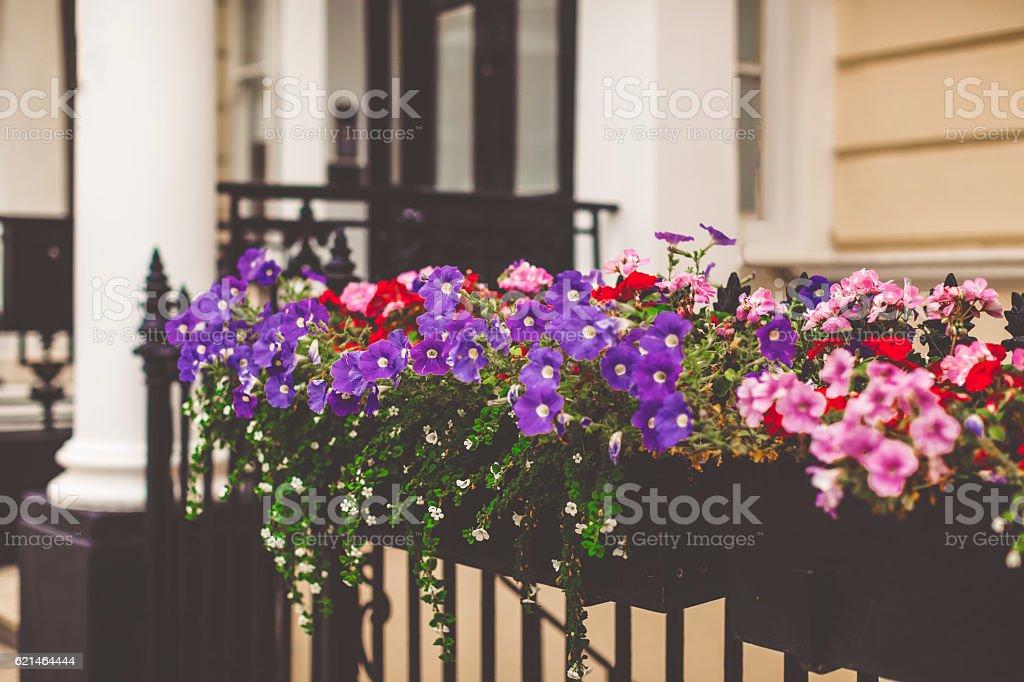 Row of flowers stock photo