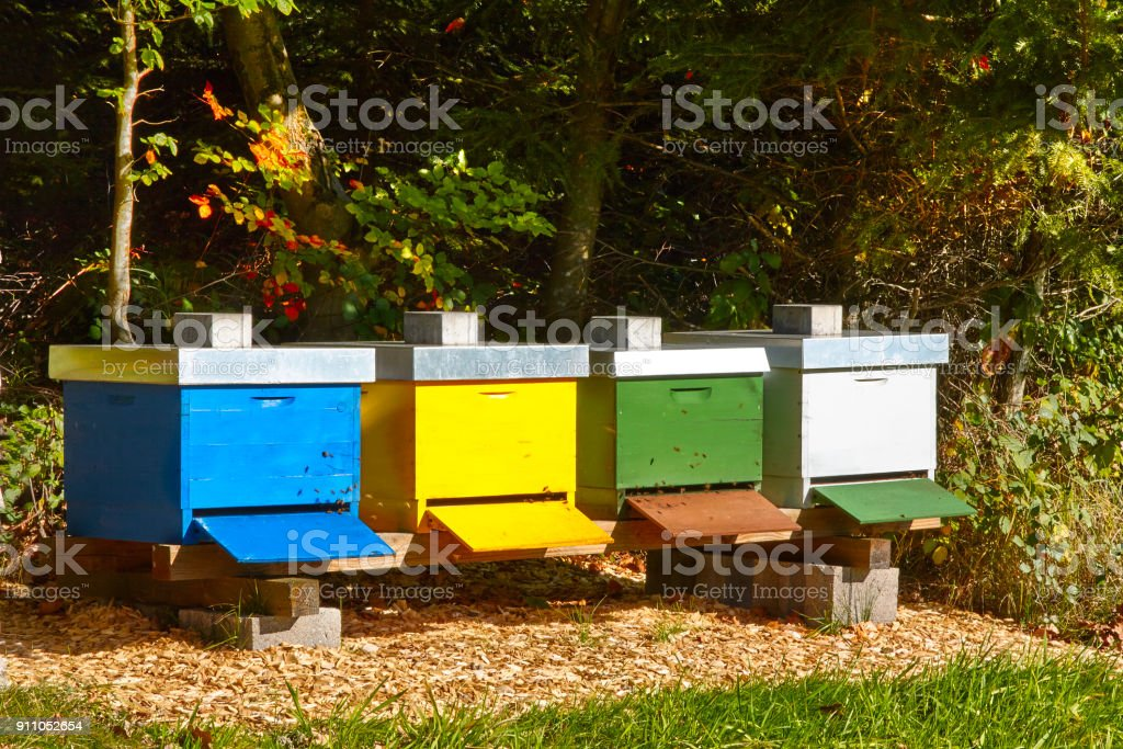 Row of four colorful beehives in nature stock photo