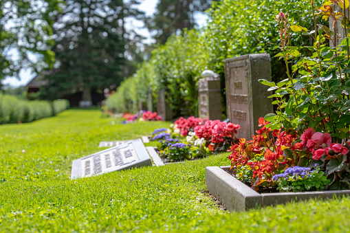 Row of grave stones with red and pink flowers