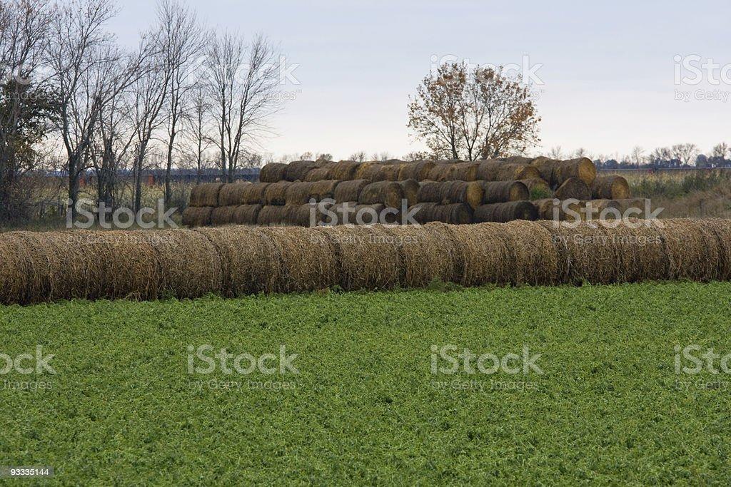 row of hay bails stock photo