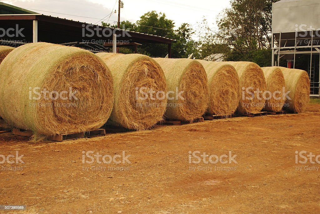 Row of Hay Bales stock photo