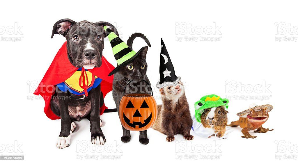 row of household pets in halloween costumes royalty free stock photo