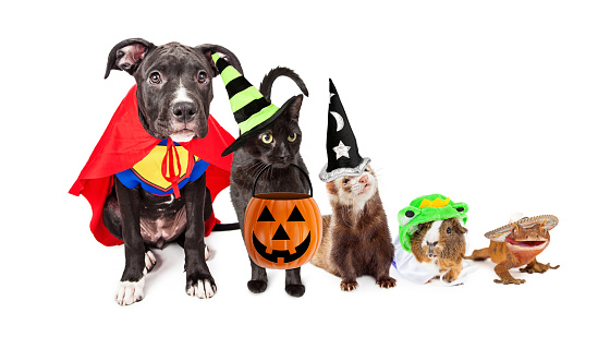Row of household pets wearing halloween costumes. Sized for horizontal website banner or social media cover.