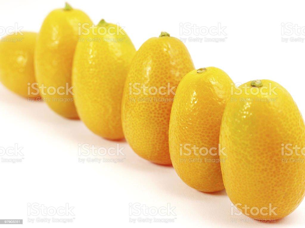 Row of kumquat royalty-free stock photo