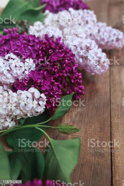 Row of liliac flowers on wooden background with space for message or picture id1137142625?b=1&k=6&m=1137142625&s=612x612&h=eednkwxjtweswprbkc8iarm8akoyot0m7uyv9xape4s=