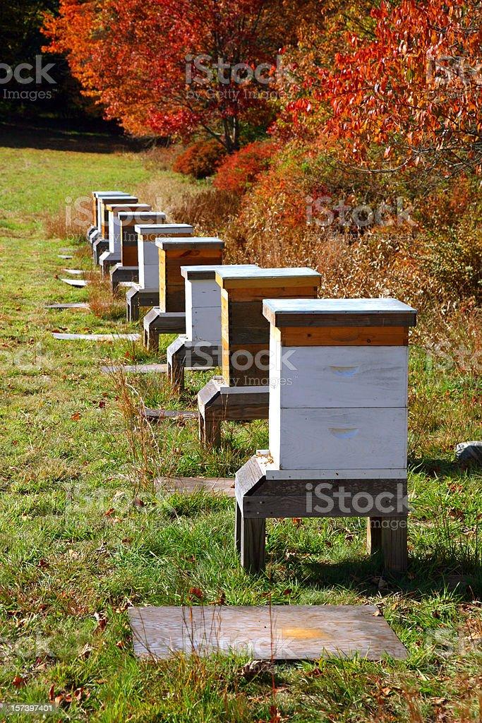Row of man made honey bee boxes stock photo