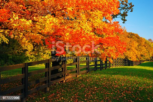 Maple trees glow in a vibrant autumn hue lining a farm road.